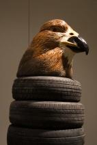 Australia Head (Hawthorn Hawk)